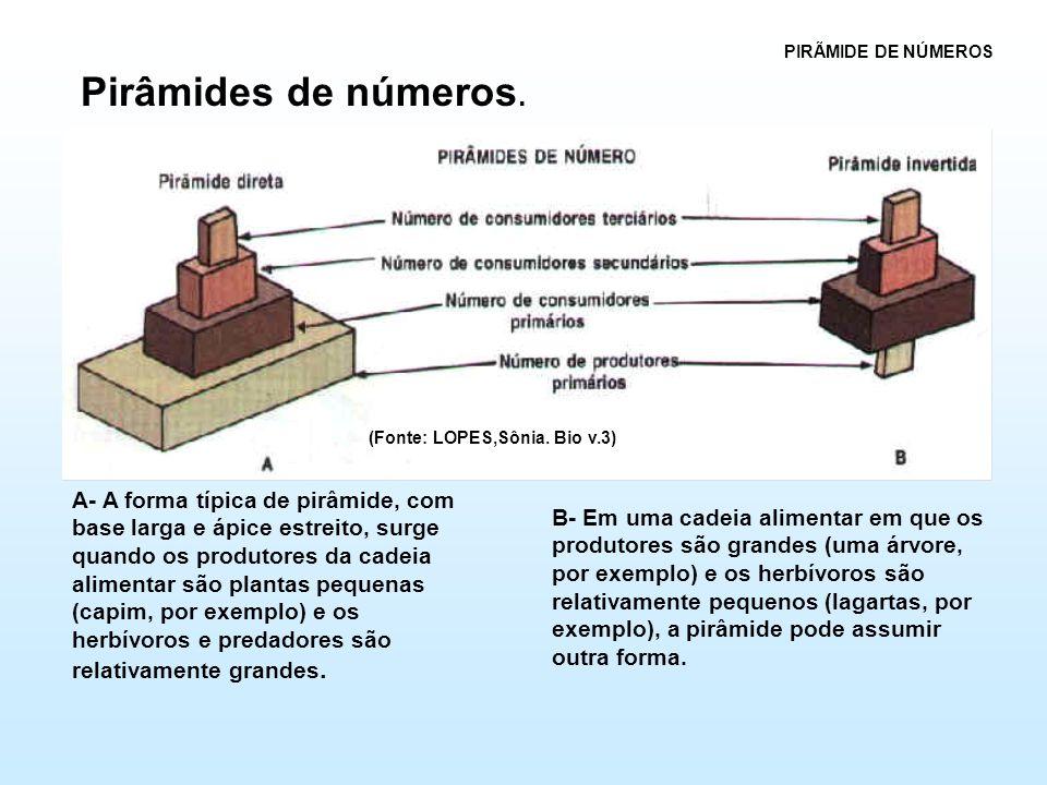 PIRÃMIDE DE NÚMEROS Pirâmides de números. (Fonte: LOPES,Sônia. Bio v.3)