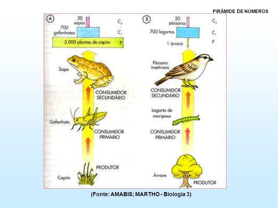 (Fonte: AMABIS; MARTHO - Biologia 3)