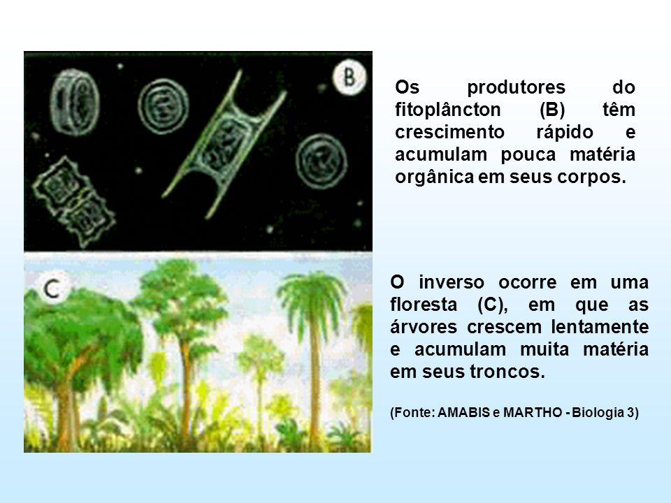 Os produtores do fitoplâncton (B) têm crescimento rápido e acumulam pouca matéria orgânica em seus corpos.