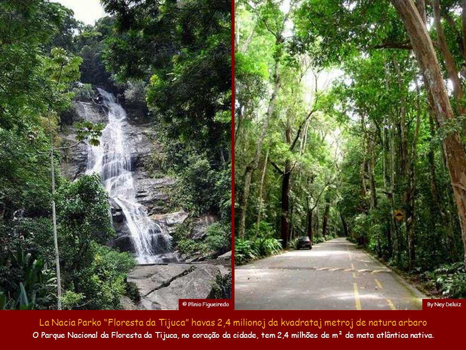 © Plinio Figueiredo By Ney Deluiz. La Nacia Parko Floresta da Tijuca havas 2,4 milionoj da kvadrataj metroj de natura arbaro.