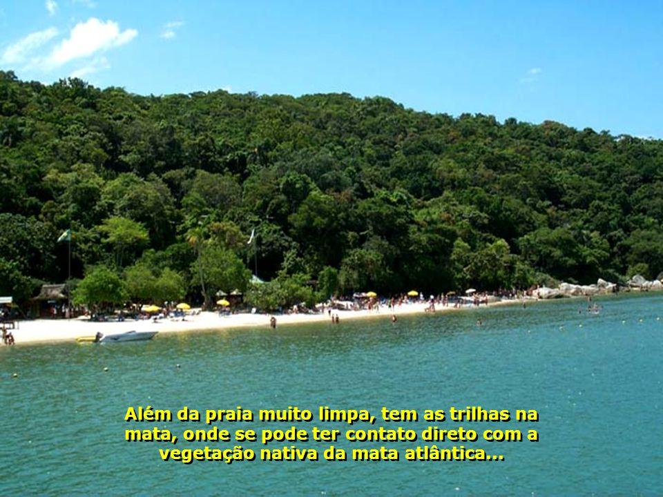 Além da praia muito limpa, tem as trilhas na mata, onde se pode ter contato direto com a vegetação nativa da mata atlântica...