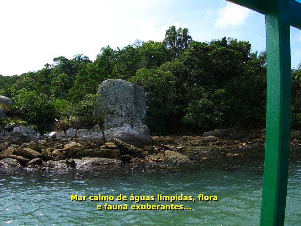 Mar calmo de águas límpidas, flora