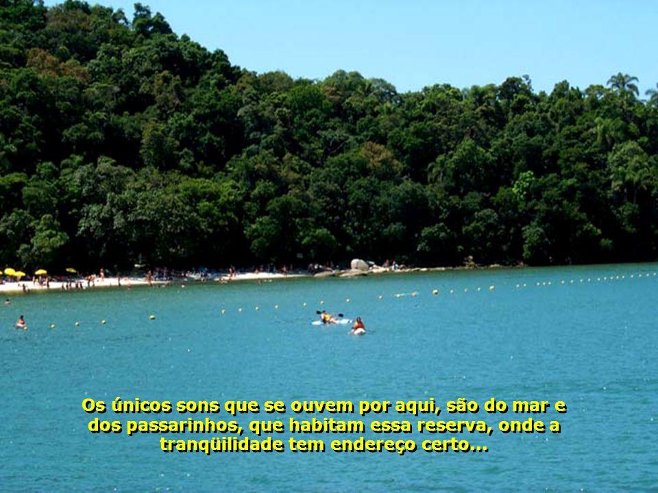 Os únicos sons que se ouvem por aqui, são do mar e dos passarinhos, que habitam essa reserva, onde a tranqüilidade tem endereço certo...