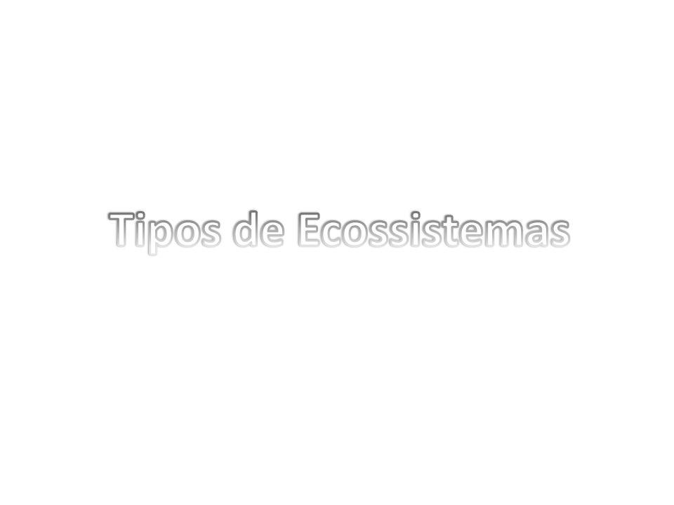 Tipos de Ecossistemas