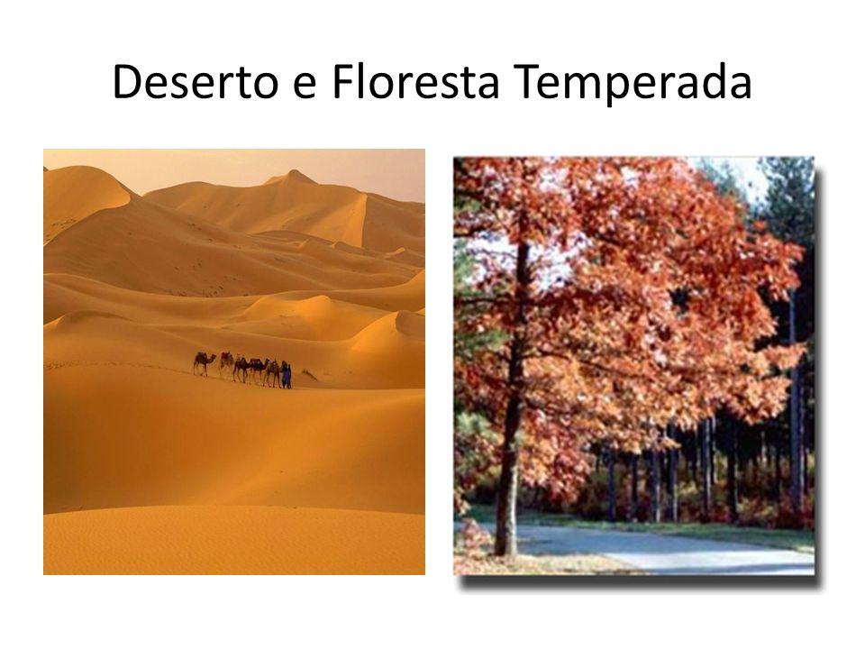 Deserto e Floresta Temperada