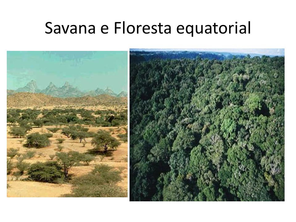 Savana e Floresta equatorial