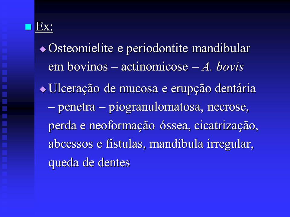 Ex: Osteomielite e periodontite mandibular em bovinos – actinomicose – A. bovis.