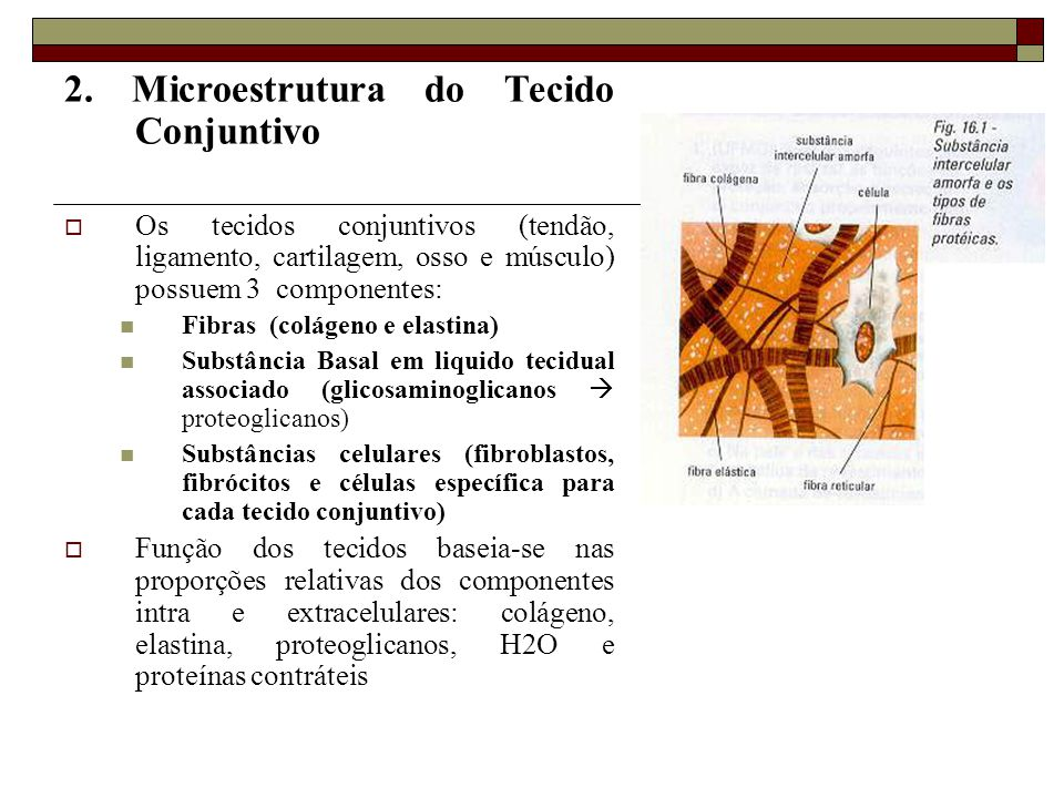 2. Microestrutura do Tecido Conjuntivo