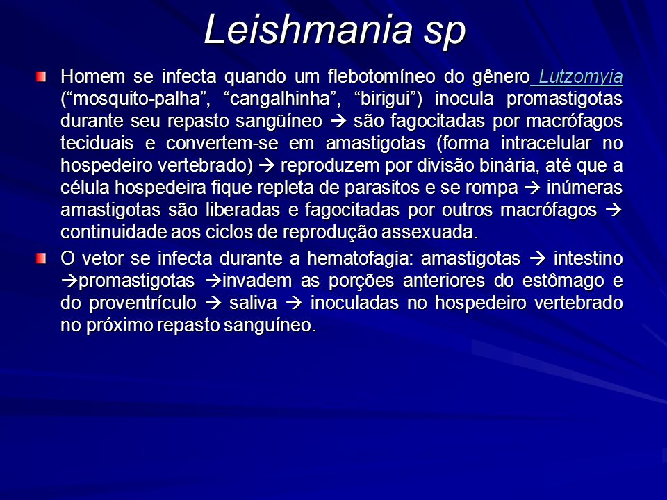 Leishmania sp