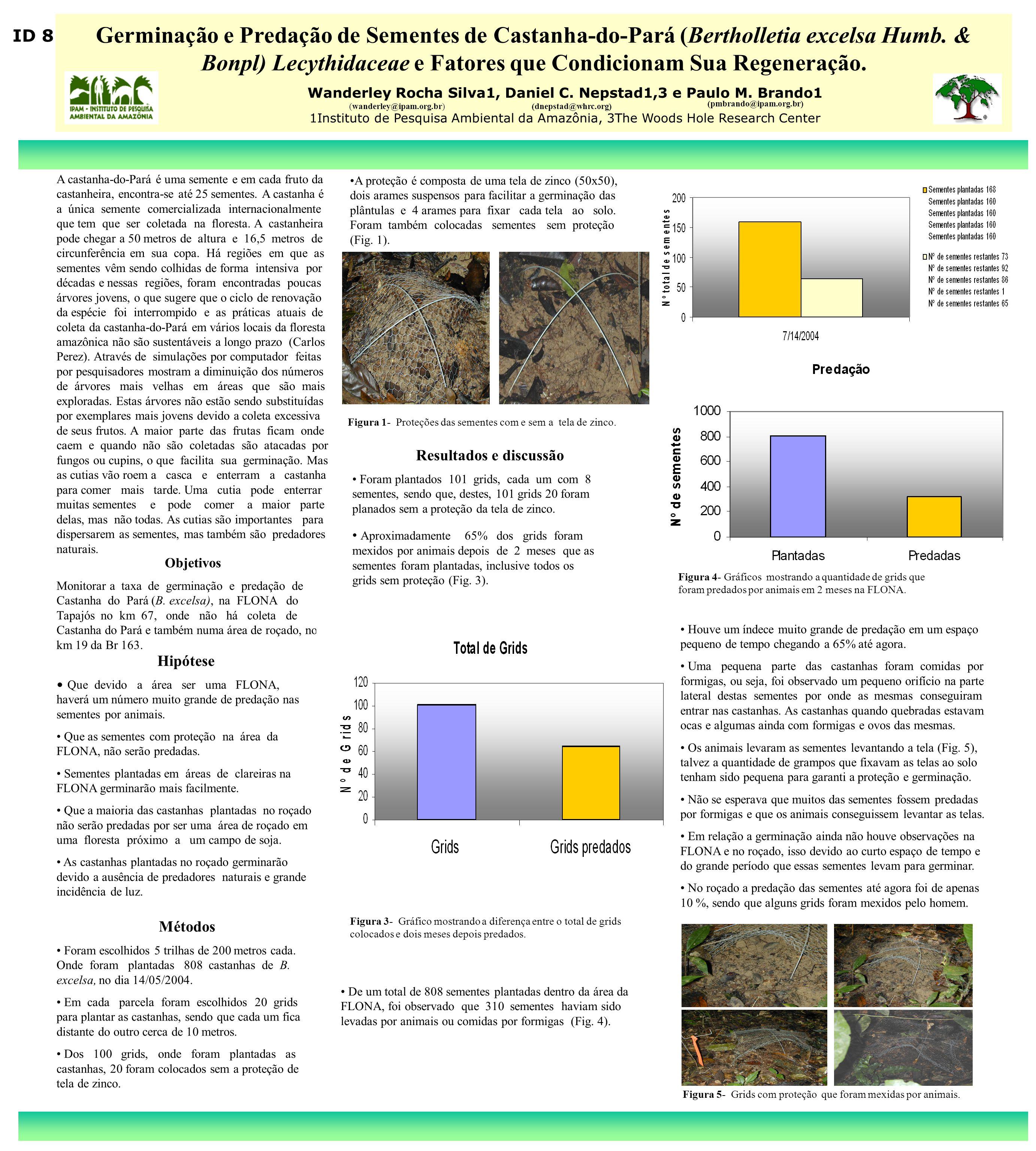 Germinação e Predação de Sementes de Castanha-do-Pará (Bertholletia excelsa Humb. & Bonpl) Lecythidaceae e Fatores que Condicionam Sua Regeneração.