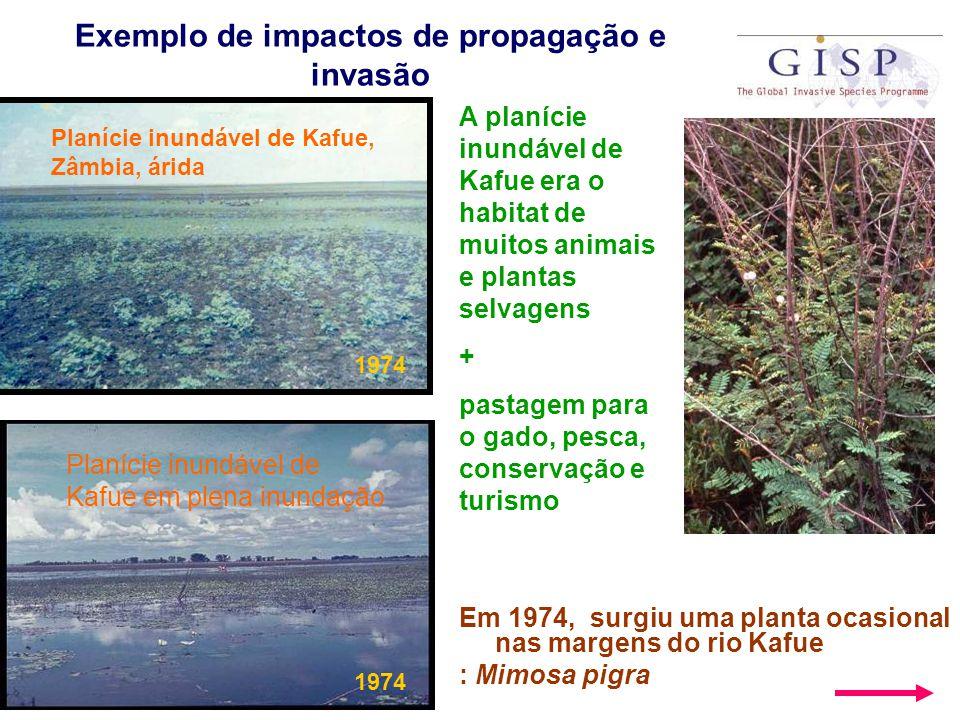 Exemplo de impactos de propagação e invasão