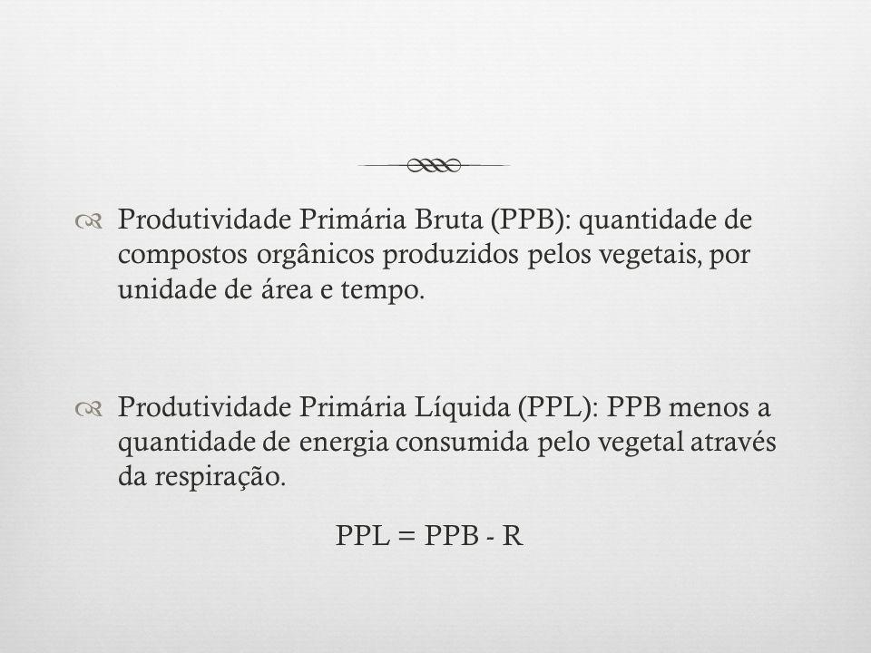 Produtividade Primária Bruta (PPB): quantidade de compostos orgânicos produzidos pelos vegetais, por unidade de área e tempo.