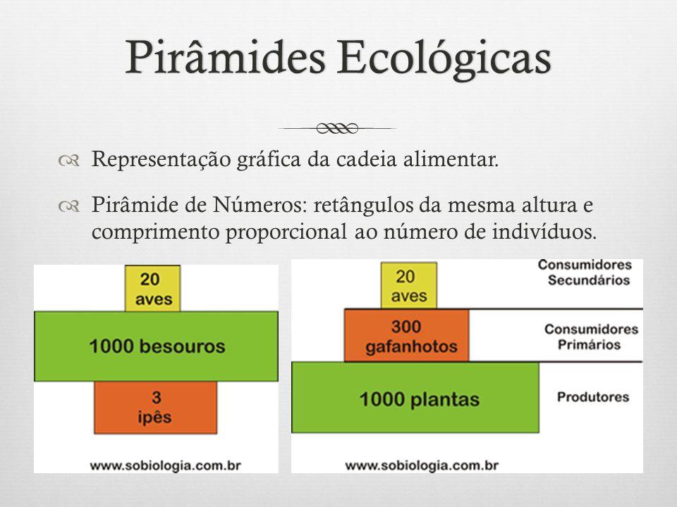 Pirâmides Ecológicas Representação gráfica da cadeia alimentar.