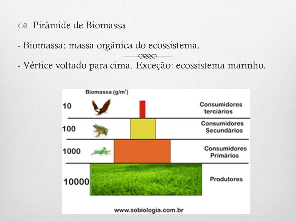 Pirâmide de Biomassa - Biomassa: massa orgânica do ecossistema.