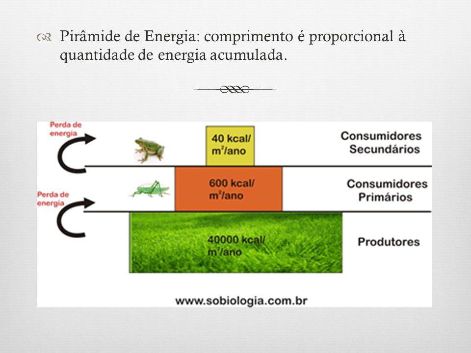 Pirâmide de Energia: comprimento é proporcional à quantidade de energia acumulada.