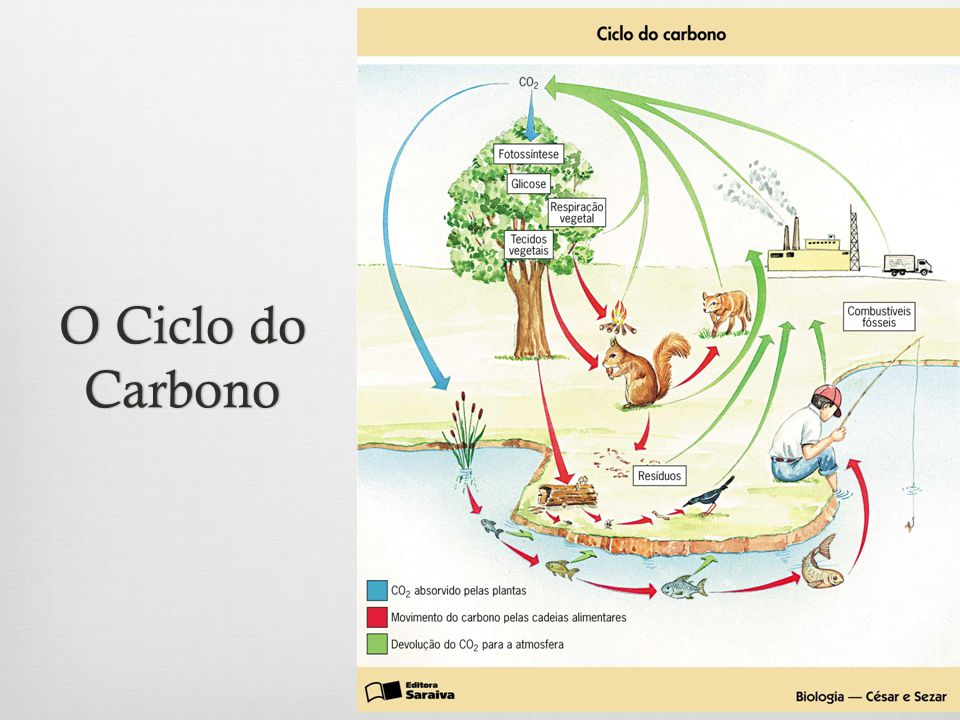 O Ciclo do Carbono