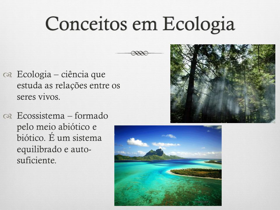 Conceitos em Ecologia Ecologia – ciência que estuda as relações entre os seres vivos.