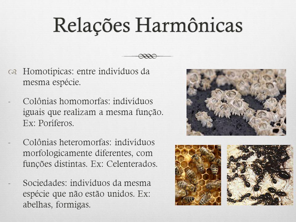 Relações Harmônicas Homotípicas: entre indivíduos da mesma espécie.