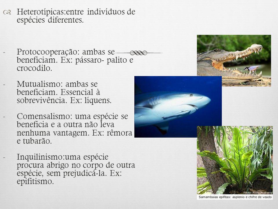 Heterotípicas:entre indivíduos de espécies diferentes.