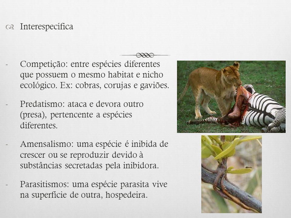 Interespecífica Competição: entre espécies diferentes que possuem o mesmo habitat e nicho ecológico. Ex: cobras, corujas e gaviões.