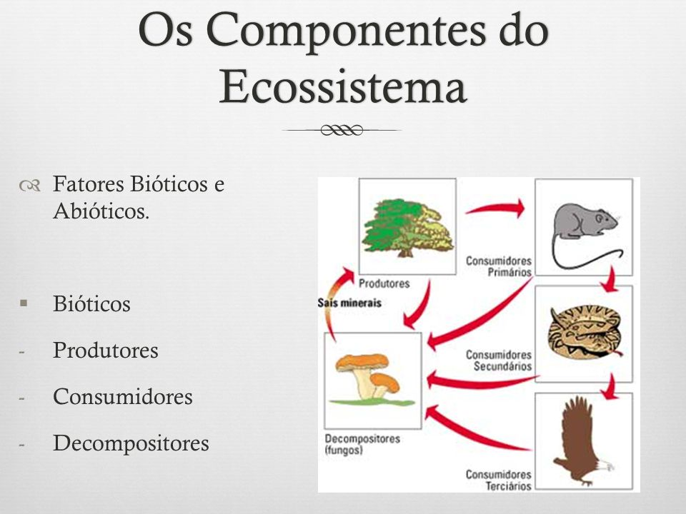 Os Componentes do Ecossistema