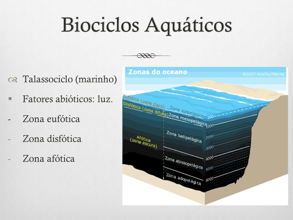 Biociclos Aquáticos Talassociclo (marinho) Fatores abióticos: luz.