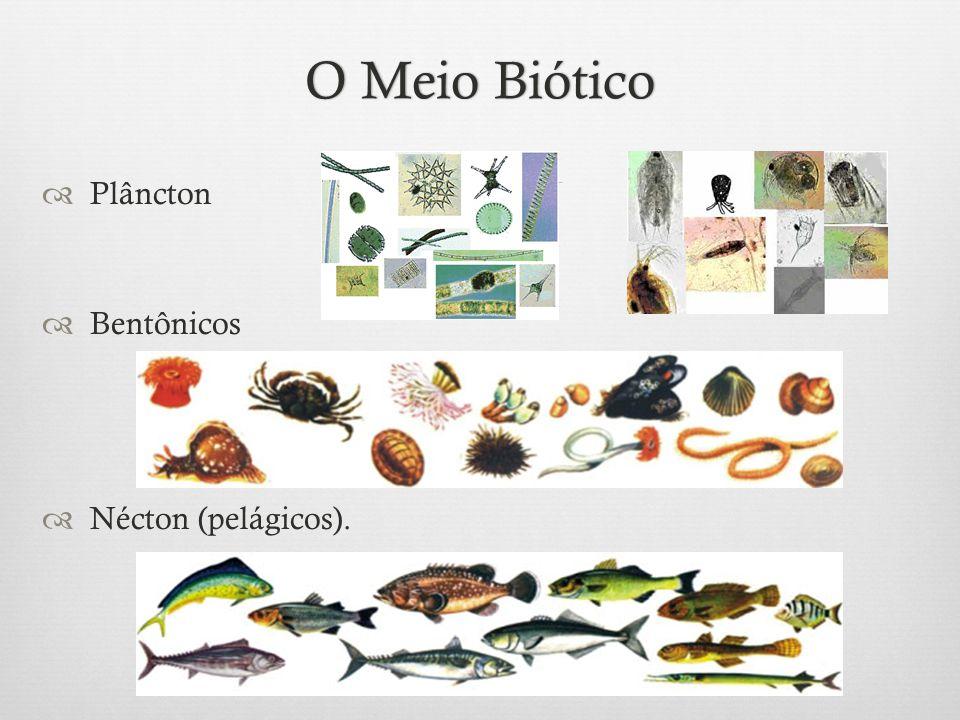 O Meio Biótico Plâncton Bentônicos Nécton (pelágicos).