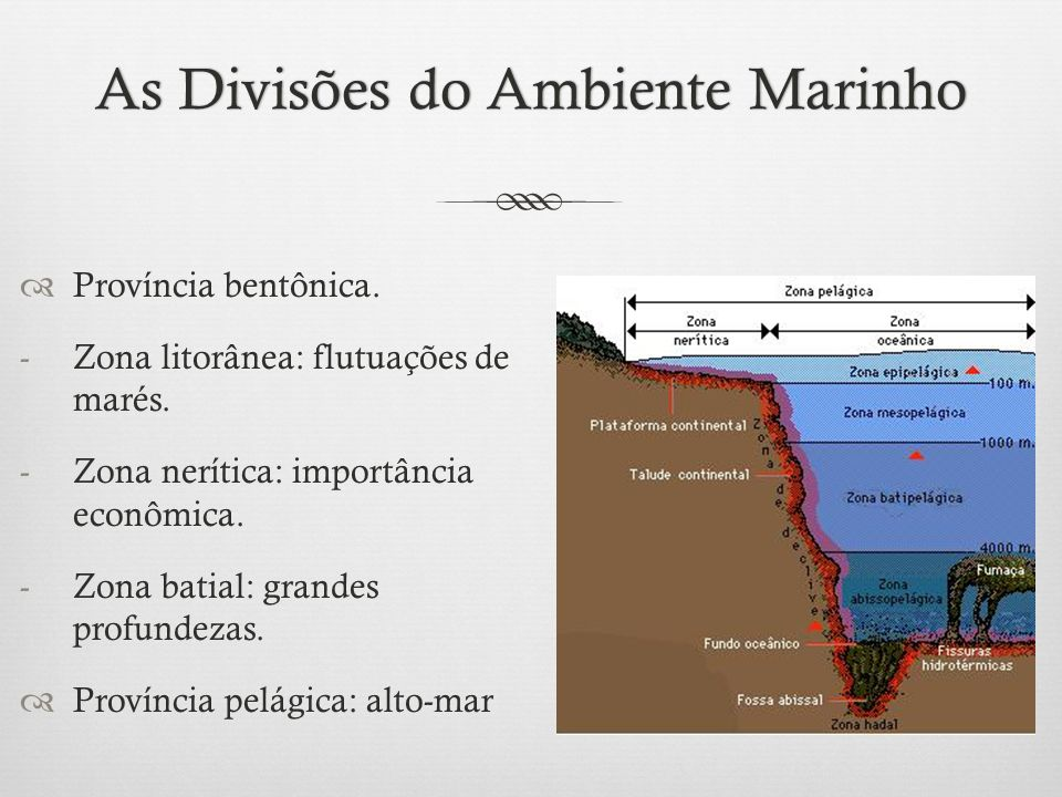 As Divisões do Ambiente Marinho
