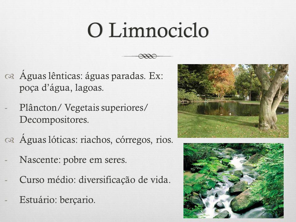 O Limnociclo Águas lênticas: águas paradas. Ex: poça d'água, lagoas.