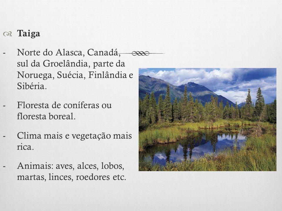 Taiga - Norte do Alasca, Canadá, sul da Groelândia, parte da Noruega, Suécia, Finlândia e Sibéria.