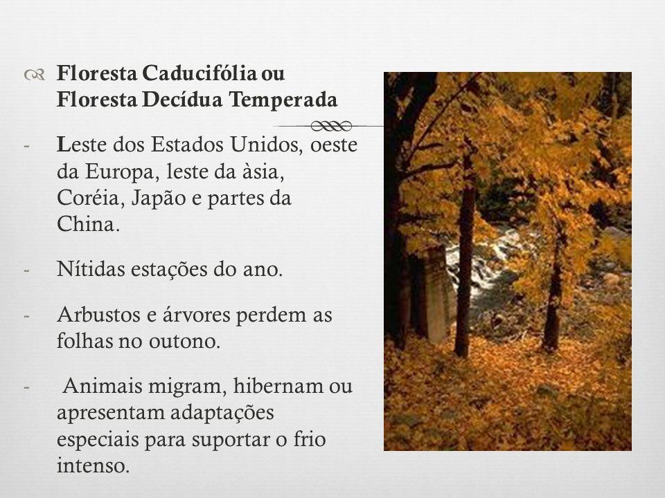 Floresta Caducifólia ou Floresta Decídua Temperada