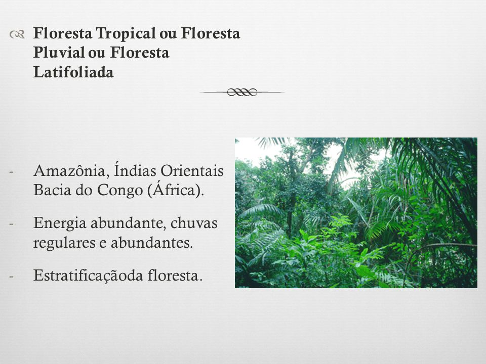 Floresta Tropical ou Floresta Pluvial ou Floresta Latifoliada