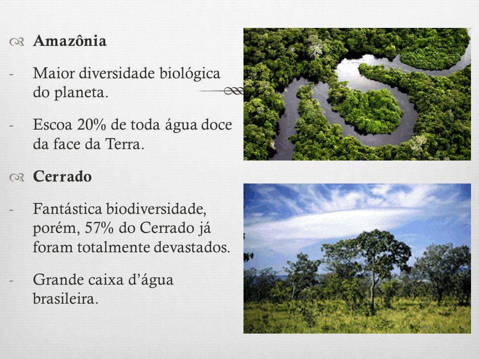 Amazônia Maior diversidade biológica do planeta. Escoa 20% de toda água doce da face da Terra. Cerrado.
