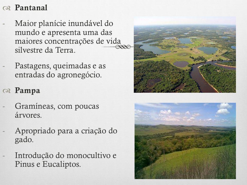 Pantanal Maior planície inundável do mundo e apresenta uma das maiores concentrações de vida silvestre da Terra.
