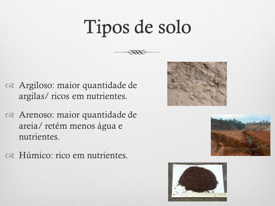 Tipos de solo Argiloso: maior quantidade de argilas/ ricos em nutrientes. Arenoso: maior quantidade de areia/ retém menos água e nutrientes.