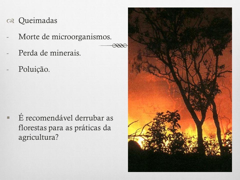 Queimadas Morte de microorganismos. Perda de minerais.