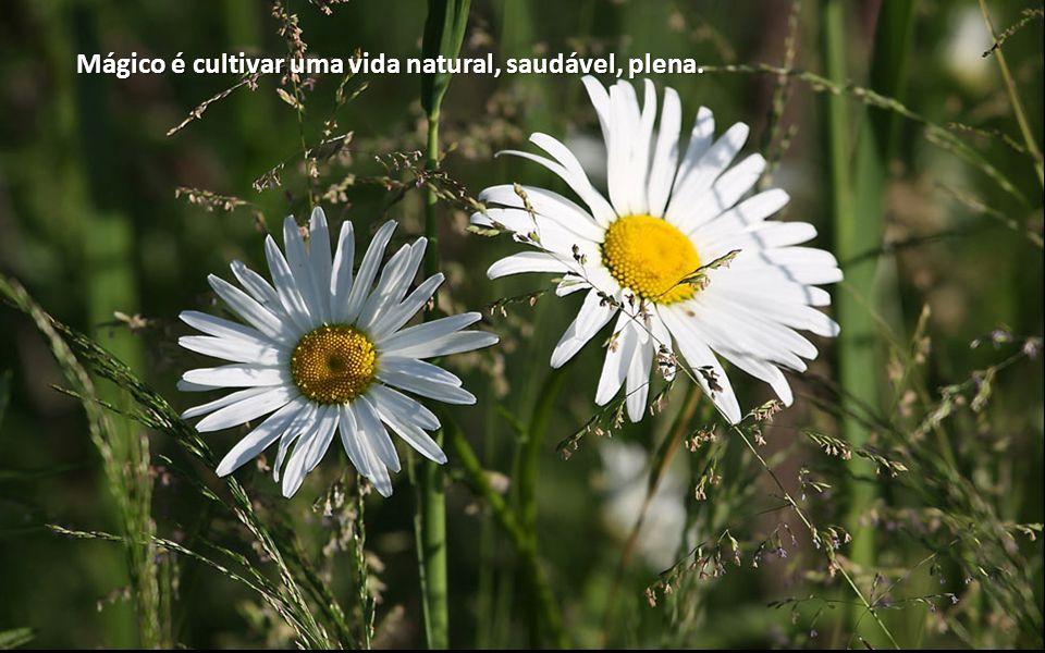 Mágico é cultivar uma vida natural, saudável, plena.