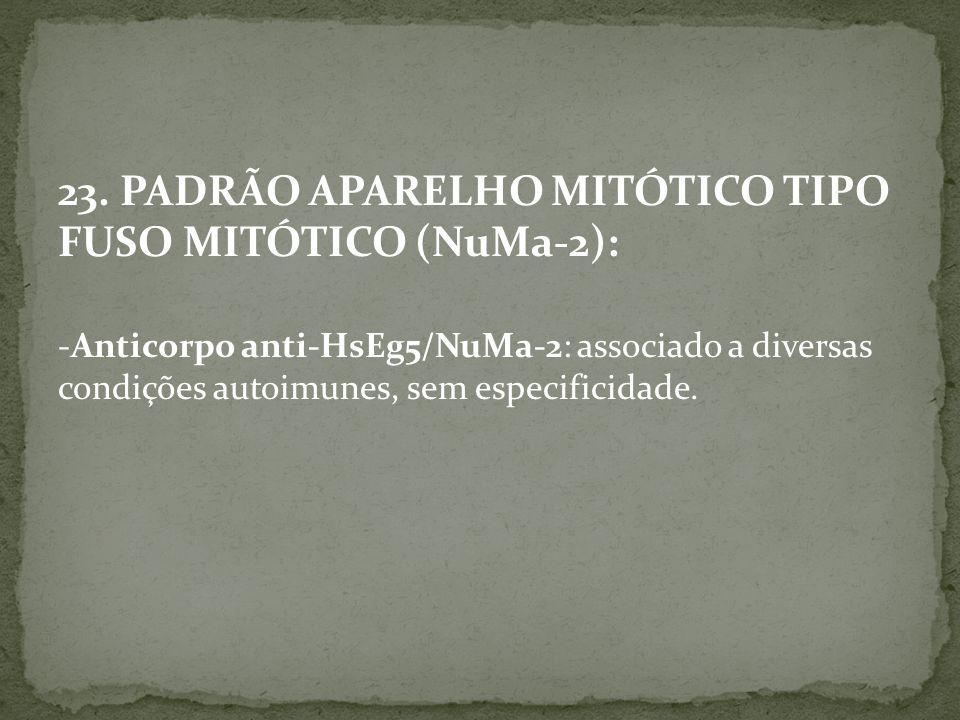 23. PADRÃO APARELHO MITÓTICO TIPO FUSO MITÓTICO (NuMa-2):