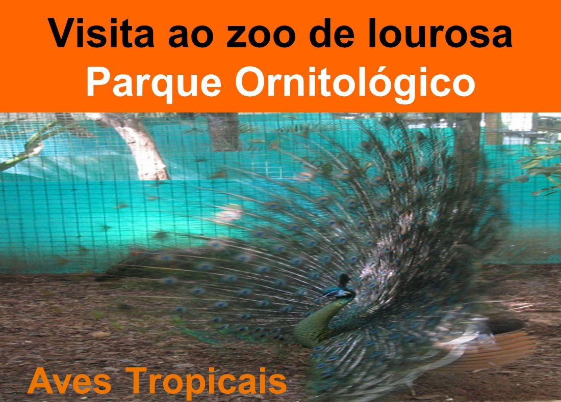 Visita ao zoo de lourosa Parque Ornitológico