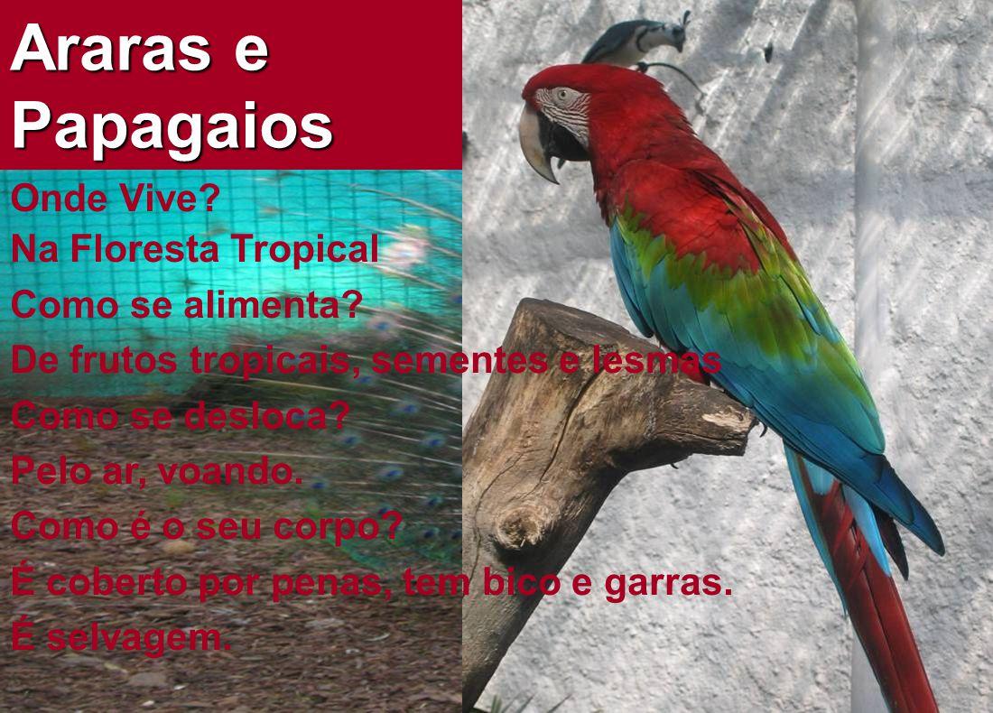 Araras e Papagaios Onde Vive Na Floresta Tropical Como se alimenta