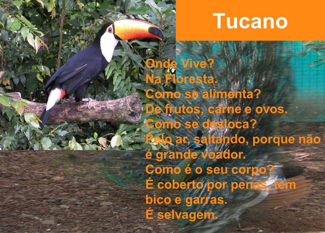 Tucano Onde Vive Na Floresta. Como se alimenta