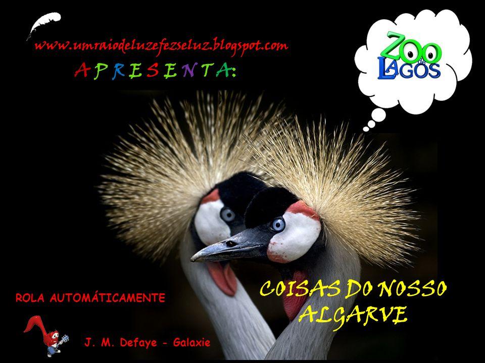 COISAS DO NOSSO ALGARVE