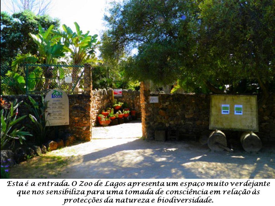 Esta é a entrada.