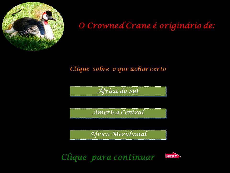 O Crowned Crane é originário de: Clique sobre o que achar certo