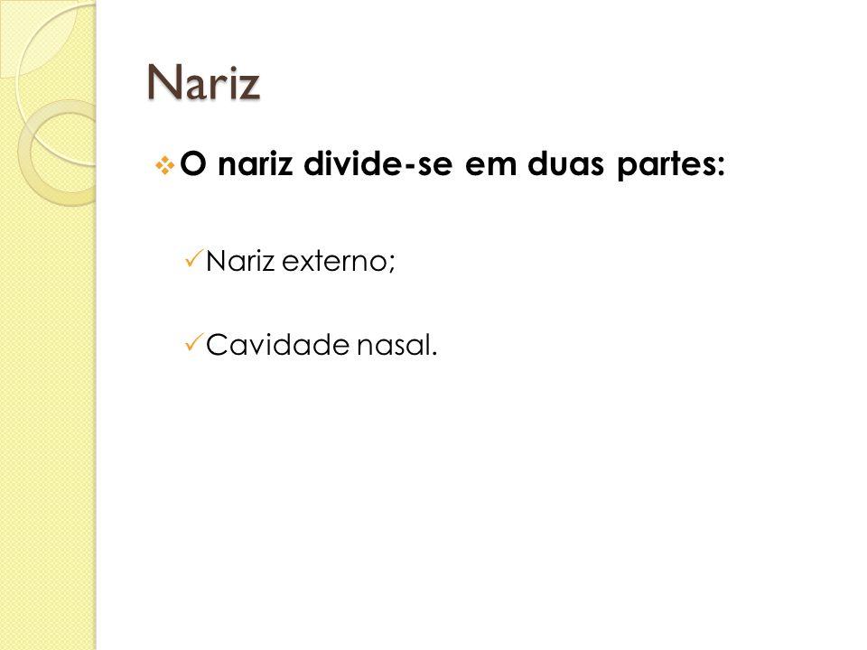 Nariz O nariz divide-se em duas partes: Nariz externo; Cavidade nasal.