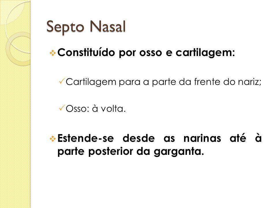 Septo Nasal Constituído por osso e cartilagem: