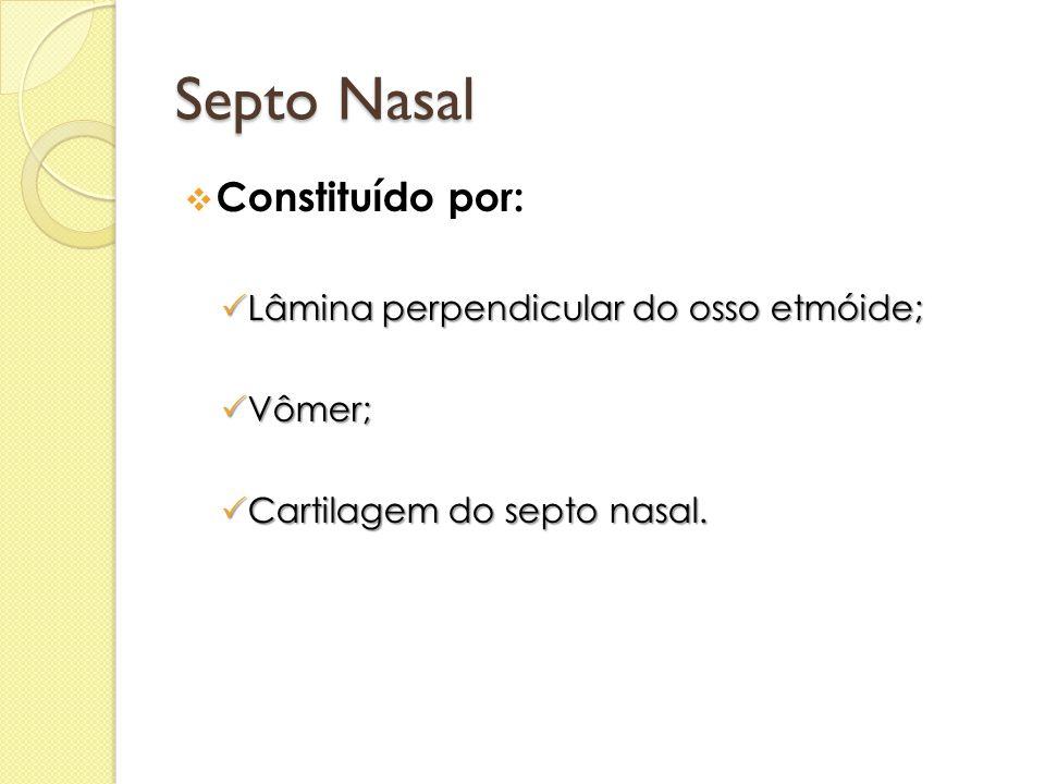 Septo Nasal Constituído por: Lâmina perpendicular do osso etmóide;