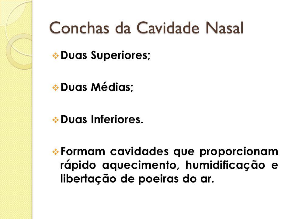 Conchas da Cavidade Nasal