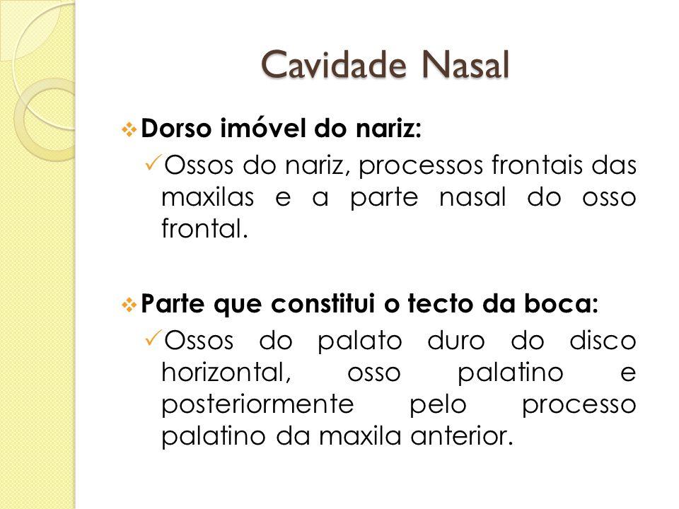 Cavidade Nasal Dorso imóvel do nariz:
