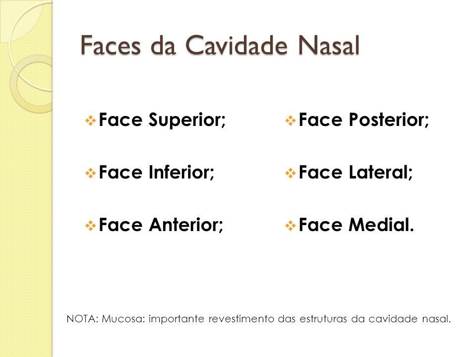 Faces da Cavidade Nasal